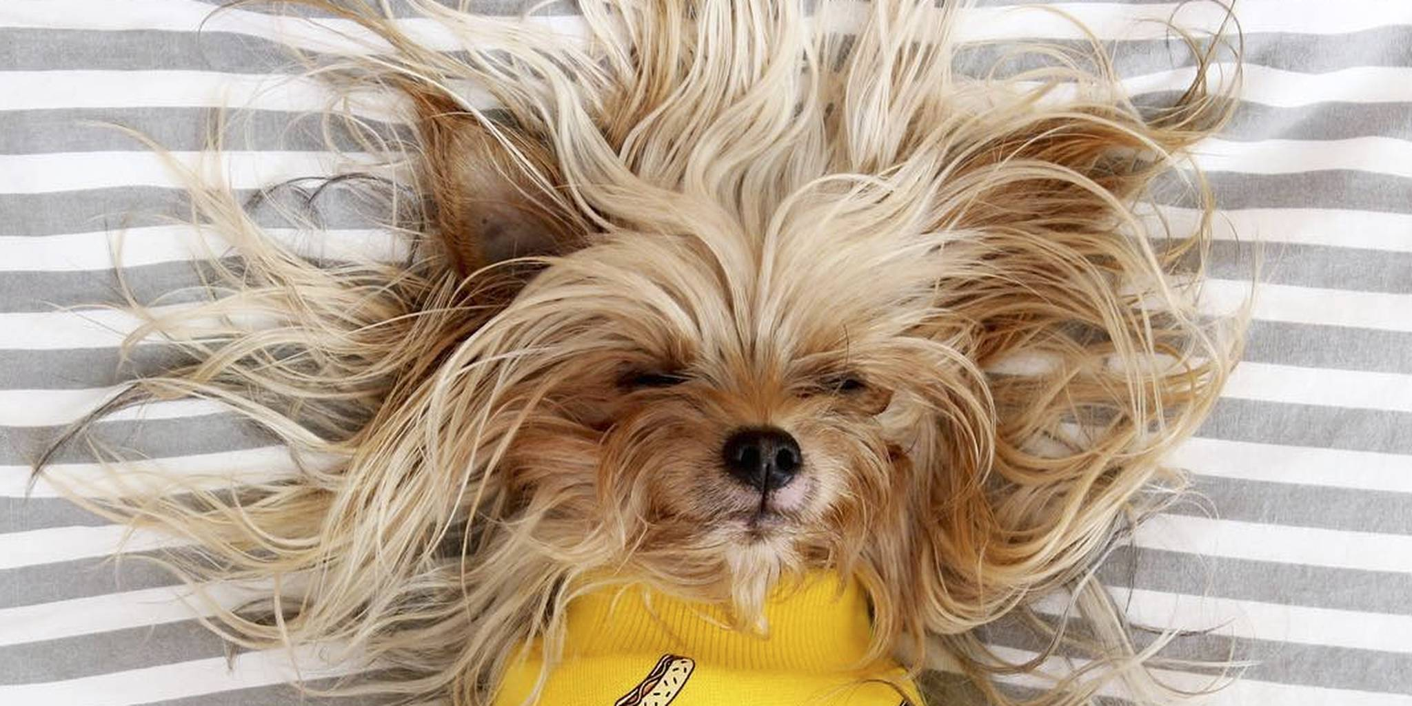 best training manual for yorkshire terrier