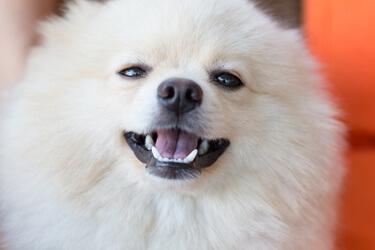 www.sunbeam.com service-and-support pet-care-bark-control-manual.html