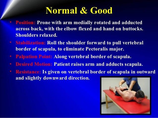 manual muscle testing serratus anterior