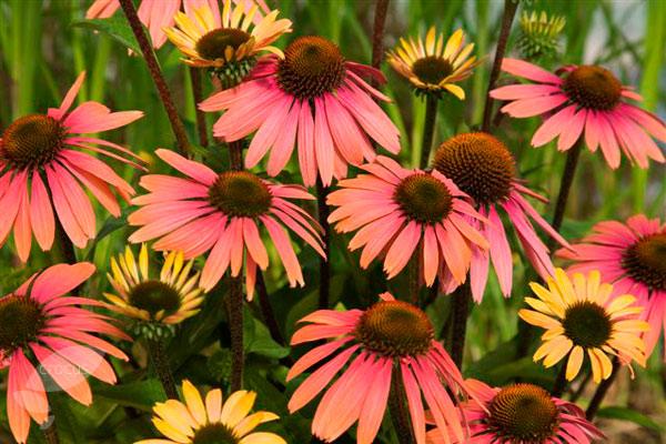age of wushu sun flower manual