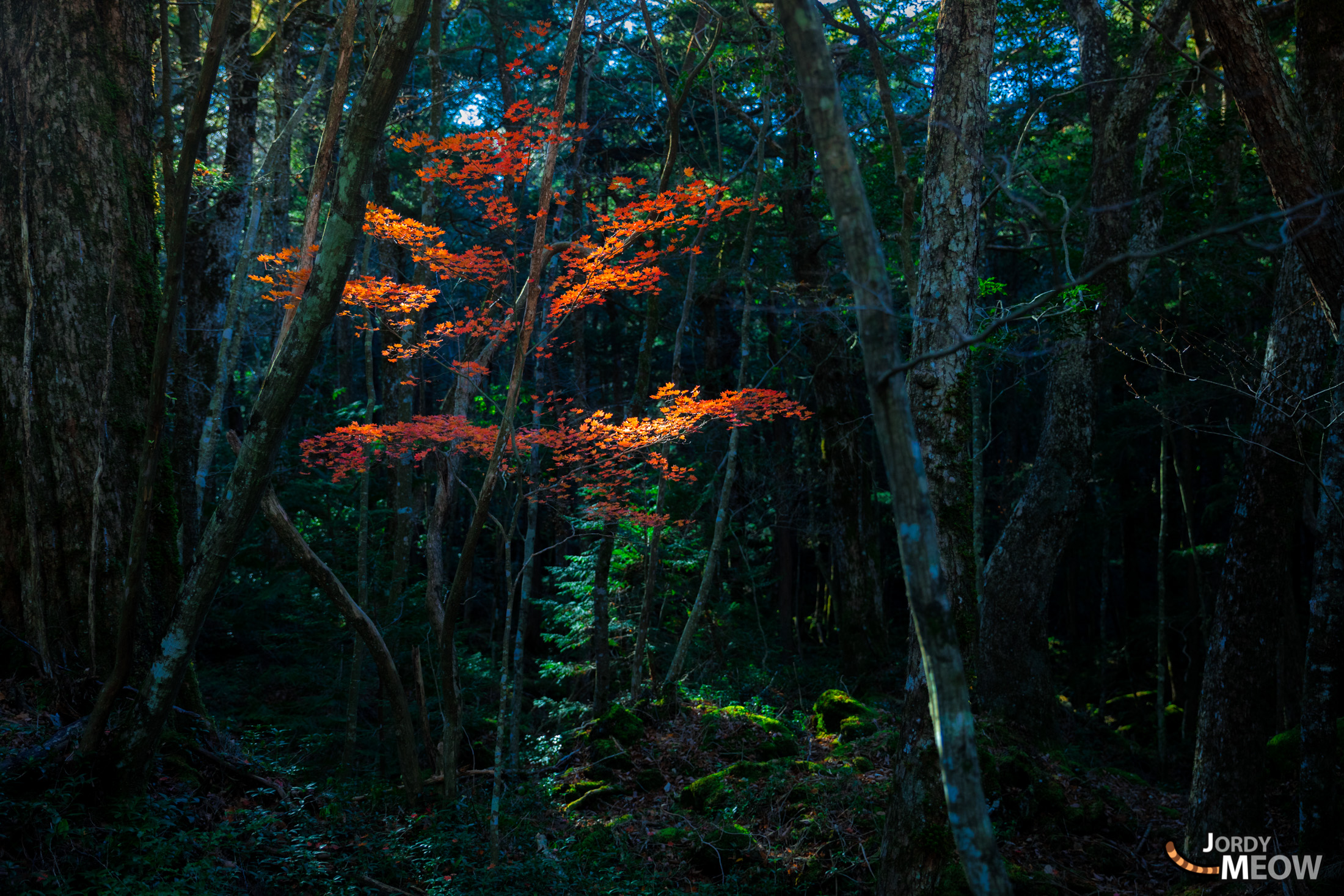 the complete manual of suicide aokigahara
