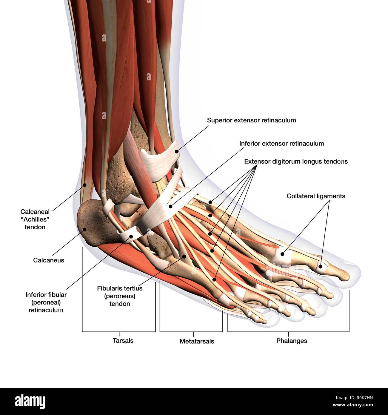 deep tissue massage manual &