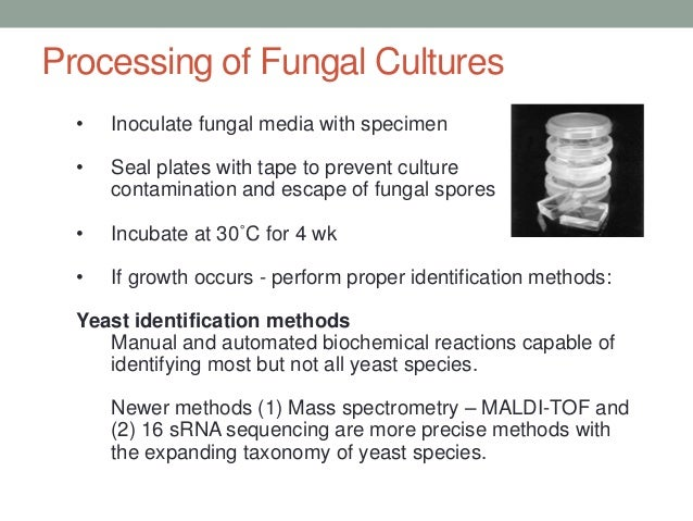 manual of methods in mycology