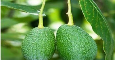 passion fruit farming manual in kenya